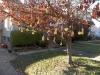 Hillcrest Halloween Tree.