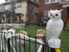 This owl says arriving early on Halloween night would be wise.